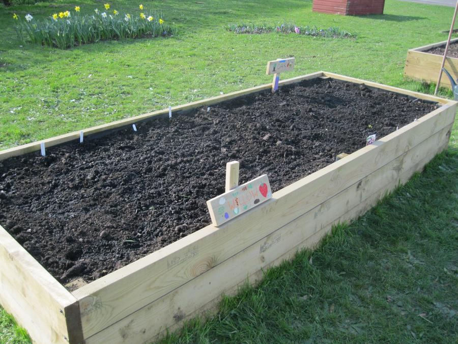 Here is the year 2 plot at the school allotment.