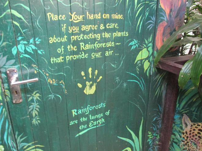 We visited the rainforest.