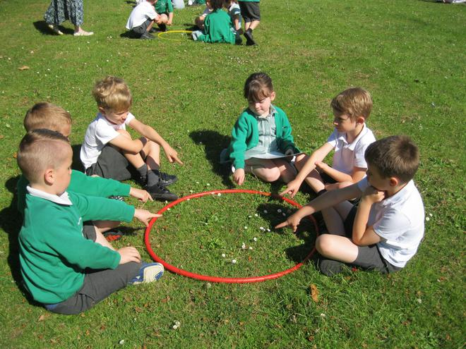 We counted daisies in 1 hoop.