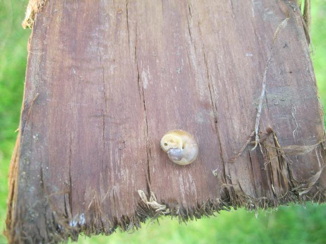 A tiny snail.