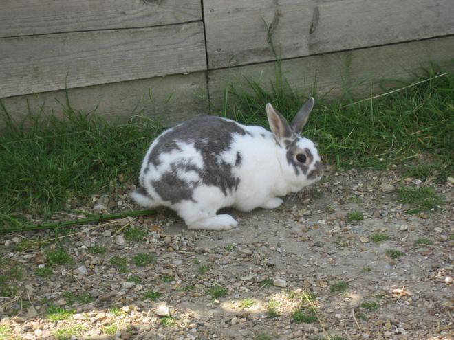 a rabbit in Bunnyland