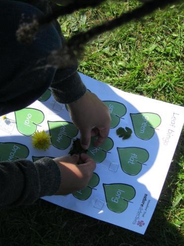 leaf bingo