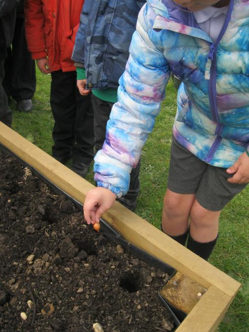 We planted onions, garlic and carrots.