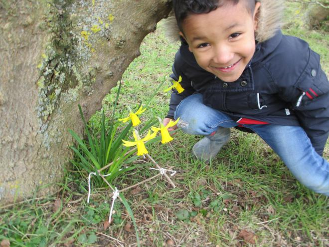 some beautiful daffodils