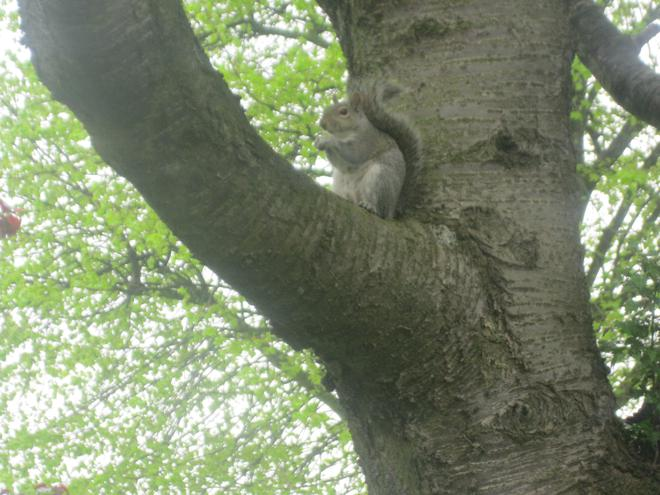 We spotted a squirrel enjoying his lunch