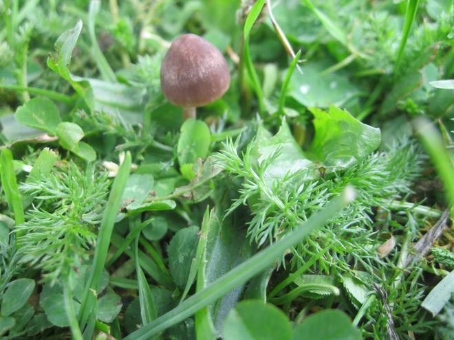 We found a fungi