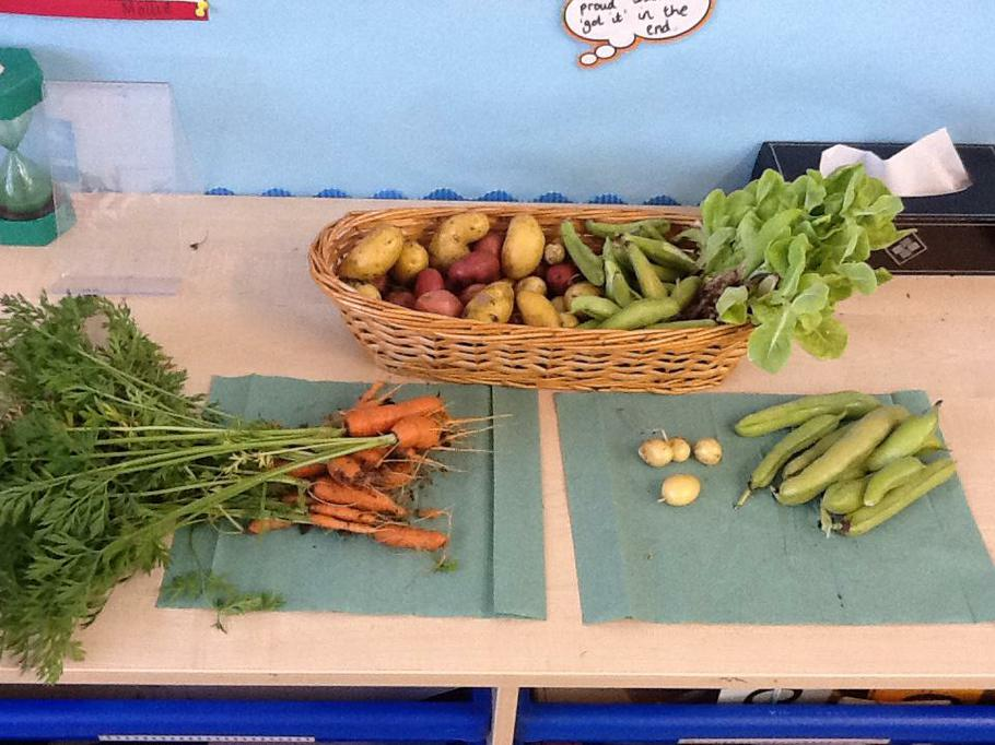 Vegetables grown by Year 1