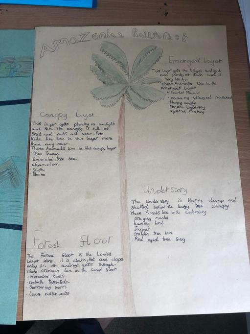 Finley S's diagram of the rainforest layers