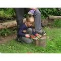 Cutting Hazel to make a wooden medallion