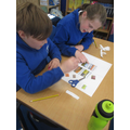 Discussing and grouping animals within their correct habitats