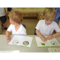 Writing about the frog lifecycle