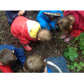 The children looked carefully and discovered amazing living things.