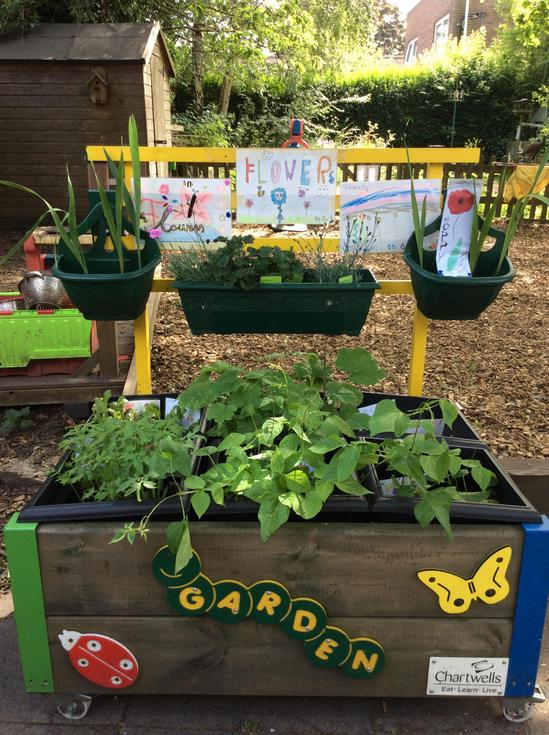 Growing our own veg