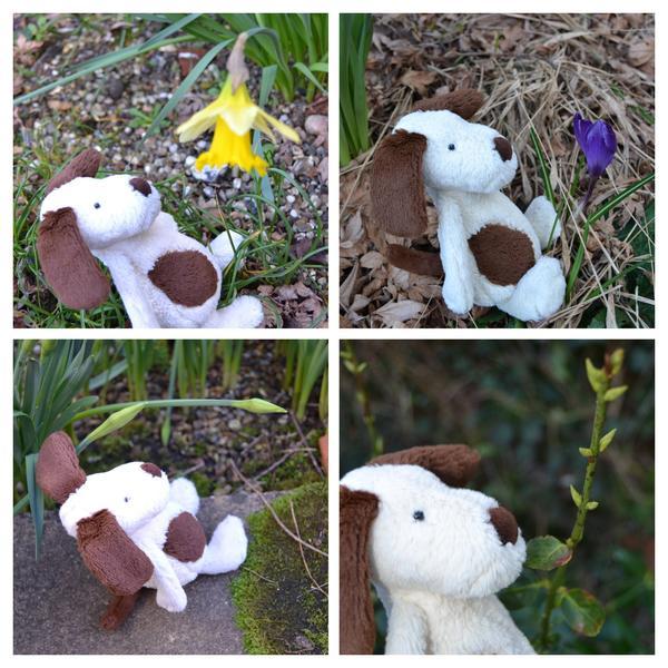 Dozy's signs of Spring