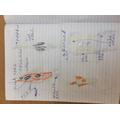 Dylan's rocket design