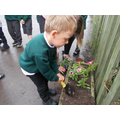 Planting our flowers