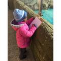 Observing the penguins...