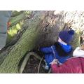 We made dens for animals that hibernate.
