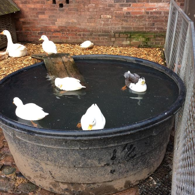 That's a funny duck pond.