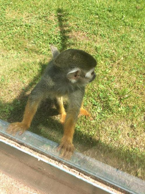 It was the spider monkey who came to see us.