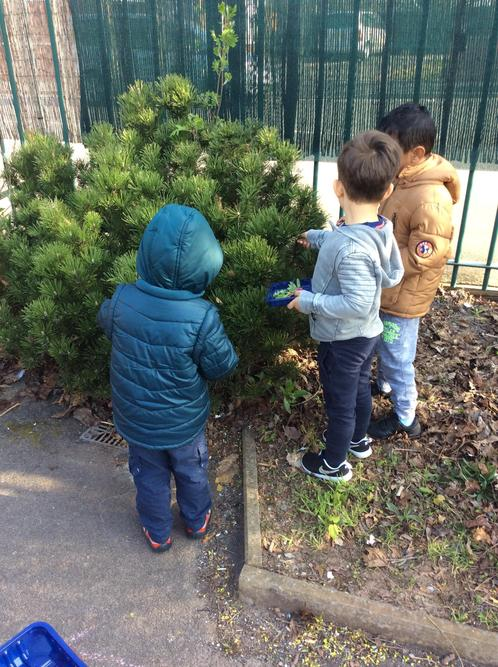We looked for flowers and leaves in the playground