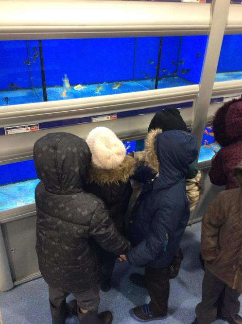 We liked the goldfish