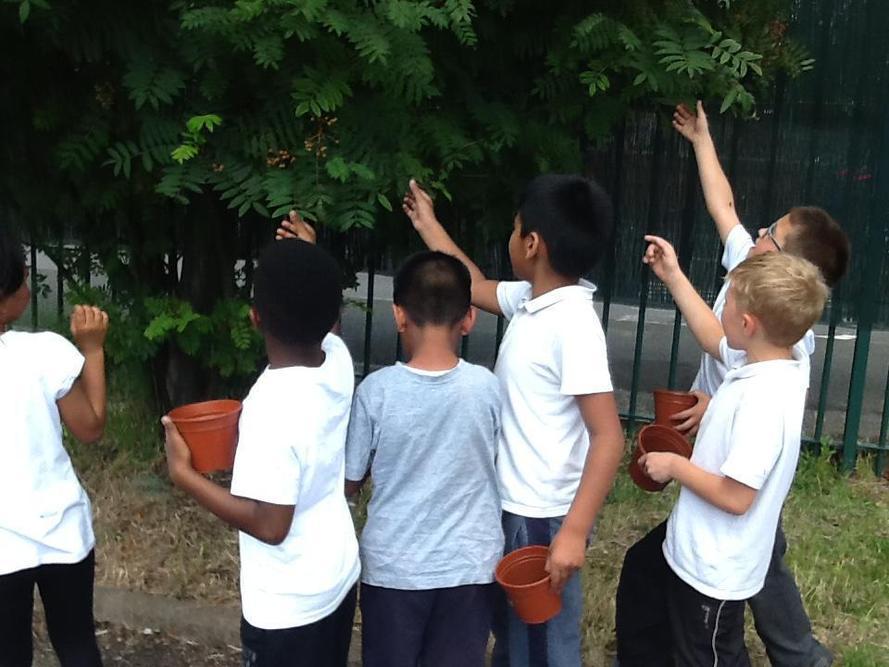 Choosing leaves in school grounds