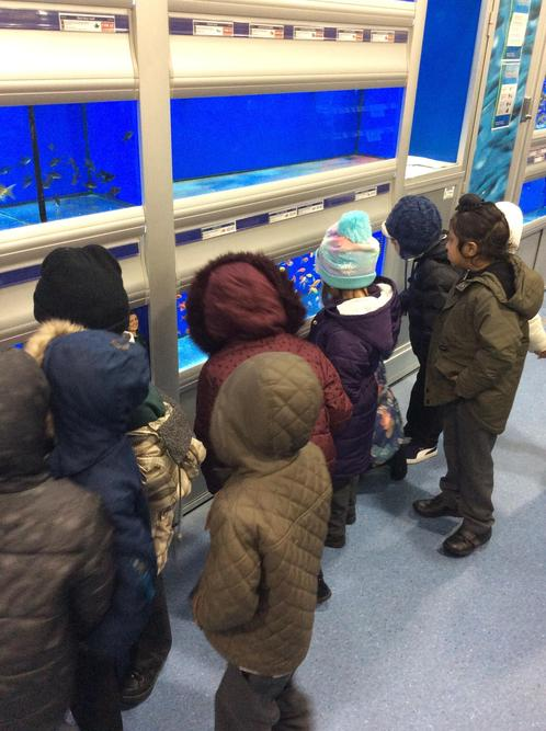 Looking at the different fish in the shop