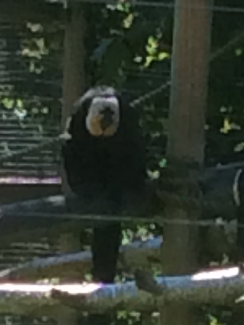 This monkey is watching us watching him!