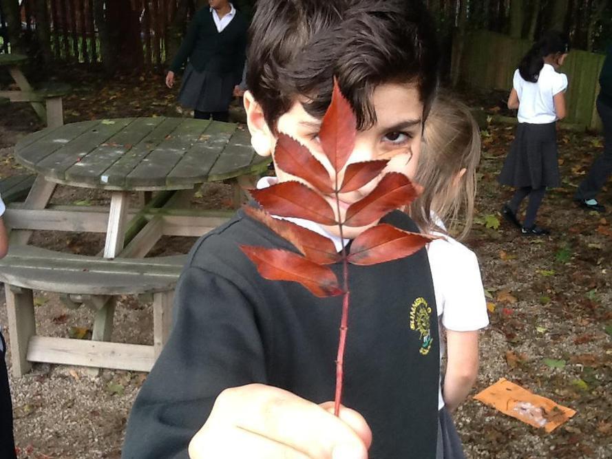 Sorting leaves