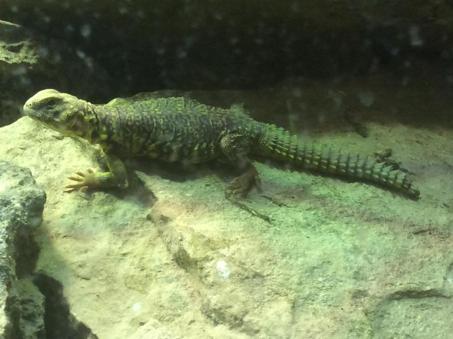 The lizard is is nice and warmunder his sun lamp