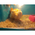 We loved having the chicks in our class.