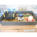 Our hatching kit with the eggs.