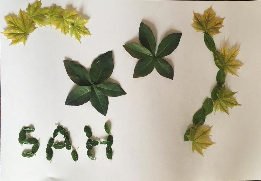 A's leaf picture
