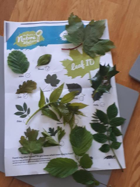 E's Leaf Hunt