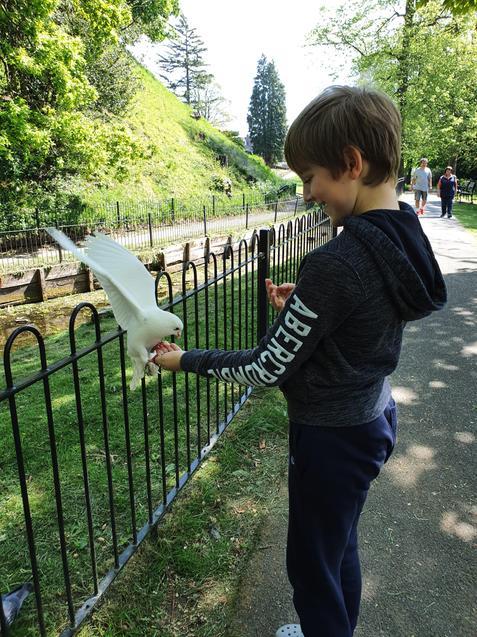 AC feeding the pigeons!