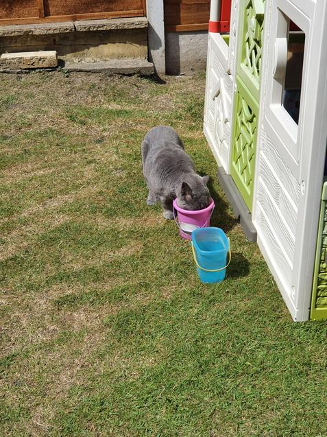 Hollie's cat being very cheeky in her garden!