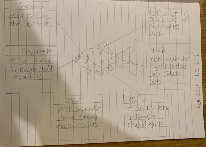 Sylvie's drawn and labelled fish