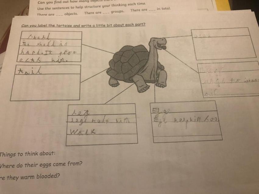 Eoghan's reptile