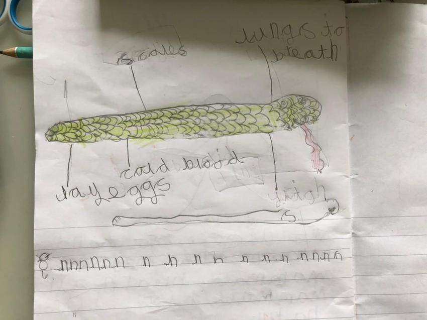 Shloka drew and labelled the parts of a snake