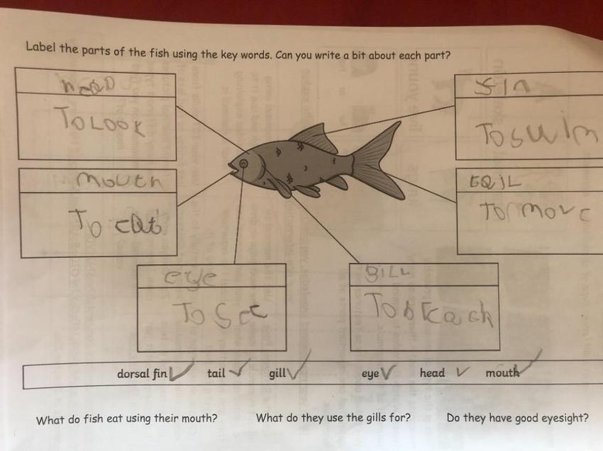 Jamie's labelled fish