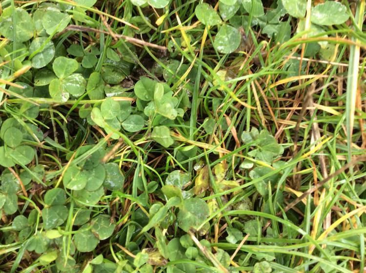...green grass...