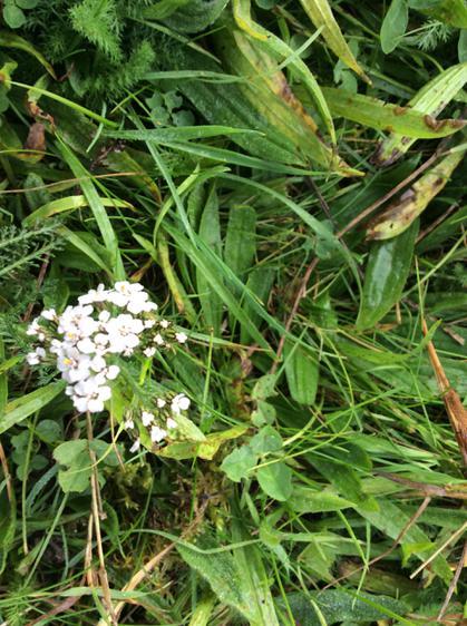 ...white flowers...