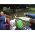 We met the reindeer!
