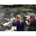 We fed the ducks!