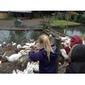 We fed the ducks!