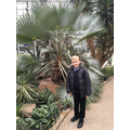 Tropical plants in the Winter Gardens