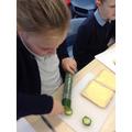 We cut up cucumbers