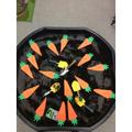 Where do carrots grow?
