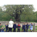 Finally! The Major Oak!
